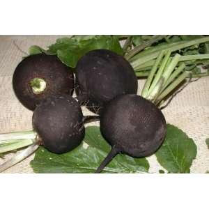 Дуэнья - редька черная, 0,5 кг, Nasko Украина фото, цена