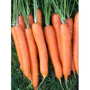 Карнавал - морковь, 50 г, Nasko Украина фото, цена