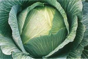 Пэрлына F1 - капуста белокочанная, 1000 семян, Nasko Украина фото, цена
