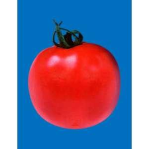 Джампакт F1 - томат детерминантный, 1000 семян, Sakata (Саката), Япония фото, цена