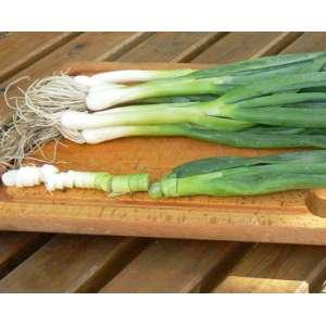 Лонг Уайт Кошигая - лук на перо, 0,05 кг, Sakata (Саката), Япония фото, цена
