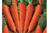 Корина - морковь, кг, Moravoseed (Моравосид), Чехия