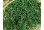 Монарх - семена укропа, кг, Moravoseed (Моравосид), Чехия
