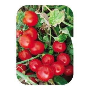Кимберлино F1 - томат детерминантный, 1000 семян, United Genetics фото, цена