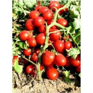 Бриксол F1 - томат детерминантный, 1000 семян, United Genetics фото, цена