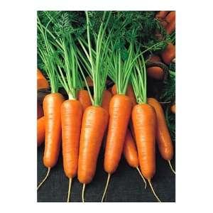Роял Шансон - морковь, 1 кг., Seminis (Семинис), Голландия фото, цена