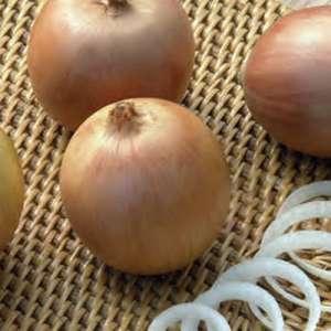 Антилопа F1 - лук репчатый, 250 000 семян, Seminis (Семинис) Голландия фото, цена