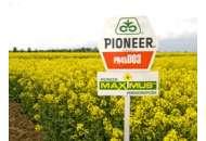 45D03, рапс, 1 п.е. (2 млн. шт) Pioneer/Пионер