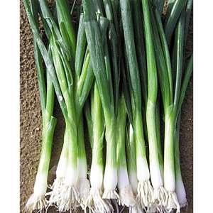 Байа Верде - лук на зелень, 100 000 семян, Seminis (Семинис) Голландия фото, цена