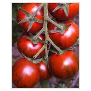 Тайгер F1 - томат индетерминантный, 1000 семян, Yuksel Tohum фото, цена