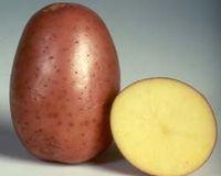 Бела Роса - весовой картофель, 1 кг фото, цена