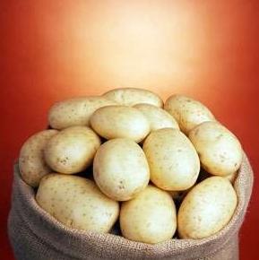 Саванна - среднеспелый сорт семенного картофеля 1 репродукции, IPM Potato Голландия фото, цена