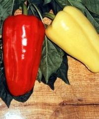 Джипси F1 - перец сладкий, 500 семян, Seminis Голландия фото, цена