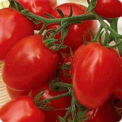 6 Пунто 7 F1 - томат детерминантный, 1 000 семян, Seminis Голландия фото, цена
