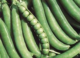 Джоф - горох овощной, 10 гр., Syngenta (Сингента), Голландия фото, цена