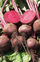 Ред Сан F1 - свекла столовая, 50 000 семян, United Genetics фото, цена