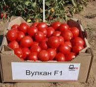 Вулкан F1 - томат детерминантный, 5 000 семян, Nunhems (Нунемс) Голландия фото, цена
